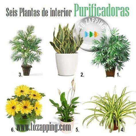 Plantas De Interior Purificadoras - Tozapping.com | Garden ...