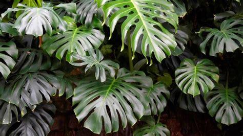 Plantas de interior que necesitan poca luz | Nombres e ...