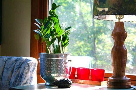 Plantas de interior que necesitan poca luz   Variedades y ...