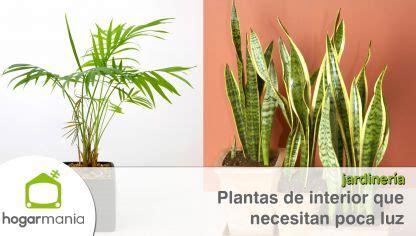 Plantas de interior que resisten con poca luz   Hogarmania