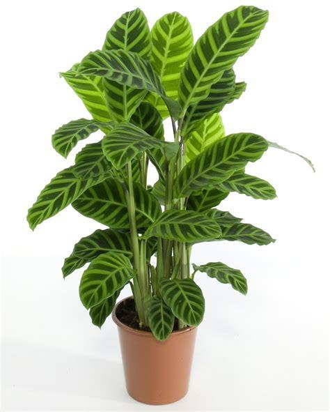 Plantas de interior resistentes + Clases de jardinaje y ...
