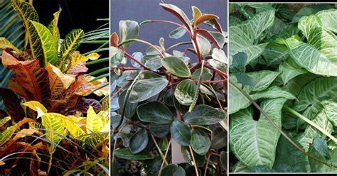 Plantas de interior sin flor | Plantas