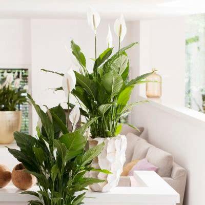 Plantas De Interior Sin Luz Natural. Es Difcil Creer Que ...