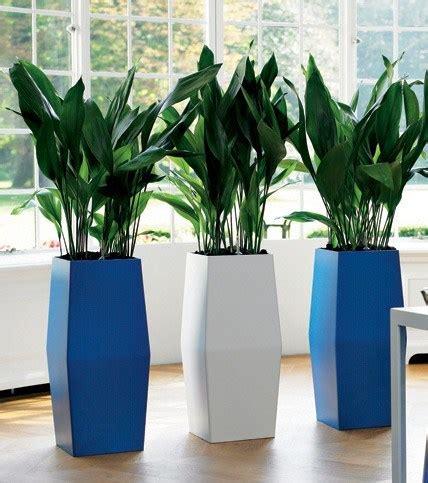 Plantas de Interior   Tipos, cuidados y fotos ...