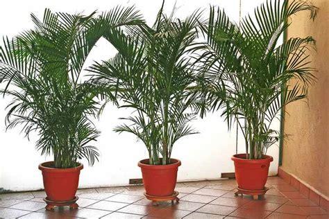 Plantas de Interior - Tipos, variedades, cuidados y riego