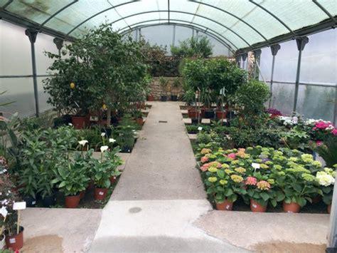 Plantas De Primavera De Exterior. Cool Son Plantas De ...
