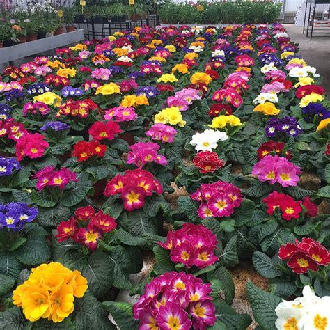 Plantas De Primavera De Exterior. Good Las Mejores Flores ...
