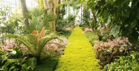 Plantas de regar poco para interiores con poca luz
