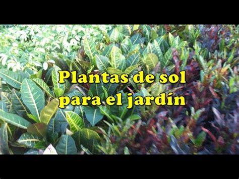 Plantas de sol para el jardín   Vida a lo Verde   YouTube