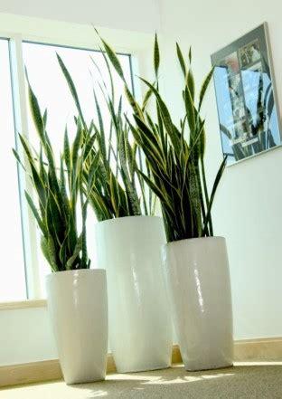 Plantas Decorativas para Interiores - Fotos e Imagens ...