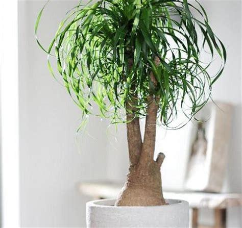 Plantas decorativas – Decoración