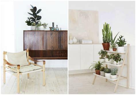 plantas dentro de casa | facilisimo.com