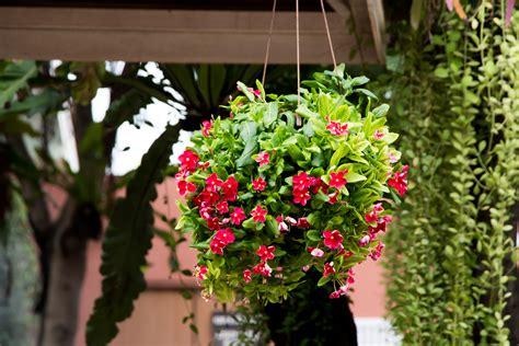 Plantas en cestos colgantes para decorar - Blog de Hogarmania