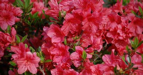 Plantas en primavera para exterior | Plantas