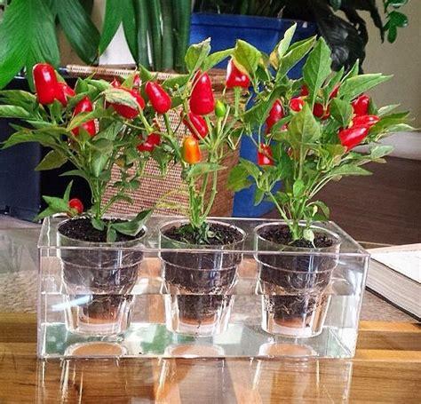Plantas + Feng Shui! | Vaso e Cia