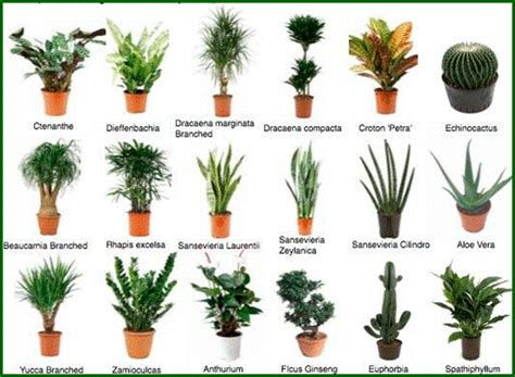 Plantas   Inspira Verde