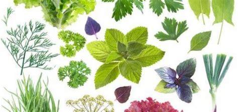 Plantas medicinales Archivos   Las Flores y Plantas