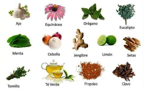 Plantas Medicinales | DIARIO EL NORTINO  IQUIQUE   EL ...