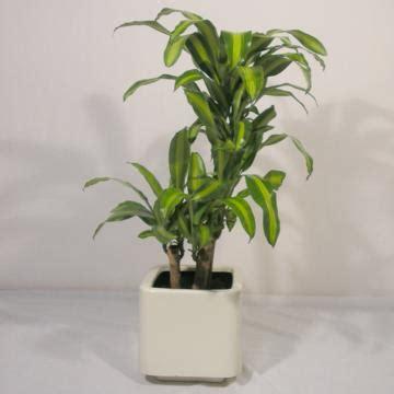 PLANTAS MEDICINALES | Farmacognocia