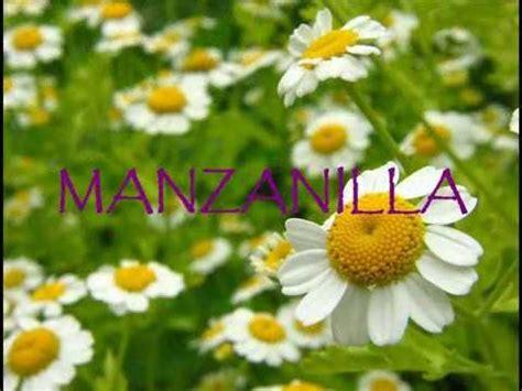 PLANTAS MEDICINALES FOTOS NARRADAS - YouTube