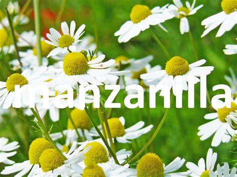 Plantas medicinales, la manzanilla - YouTube