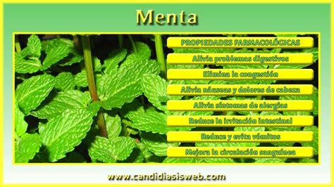 Plantas medicinales   Menta
