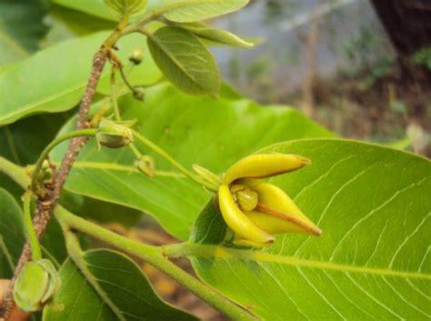 Plantas medicinales para la próstata - ONsalus