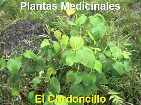 plantas medicinales para limpiar la sangre - YouTube