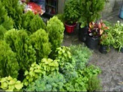 plantas medicinales y su uso - YouTube