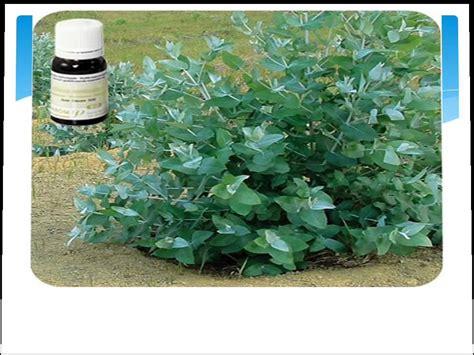 Plantas Medicinales - YouTube