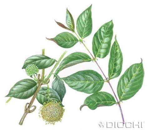 Plantas muy útiles para nosotras..... - Paperblog