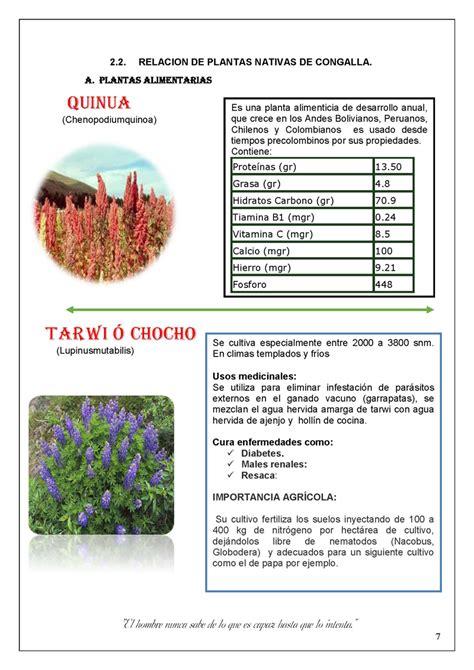 Plantas nativas de Huancavelica   Monografias.com