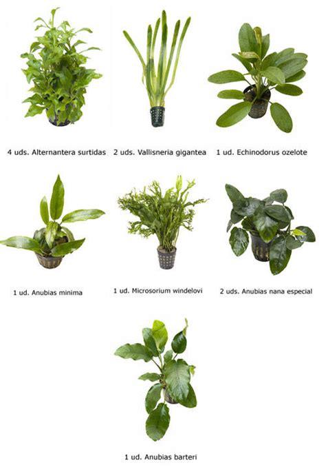 .Plantas Naturales para Acuarios Combo 10 - Tiendanimal