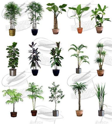 Plantas ornamentales con sus nombres - Imagui
