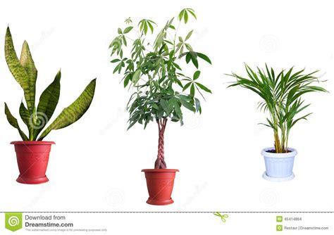 Plantas Ornamentales Foto de archivo   Imagen: 45414864