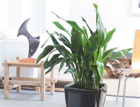 Plantas para apartamento com pouca luz | Decorando Casas