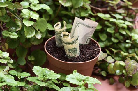 Plantas para atraer dinero - unComo
