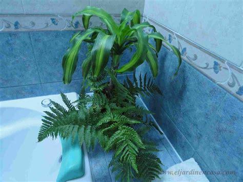 Plantas para decorar el baño  II  | El Jardin en Casa