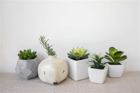 Plantas para decorar tu casa - Hogarmania