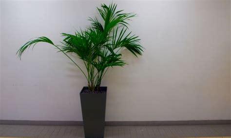 Plantas para decorar un hall sin luz natural   Decogarden
