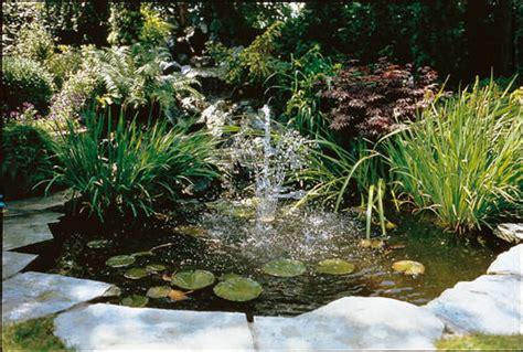 Plantas para estanques | Floresyplantas.net