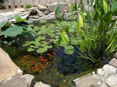 Plantas para estanques   Tendenzias.com