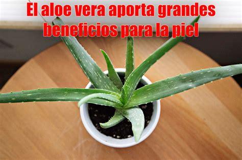 Plantas para interior: beneficios y especies más ...