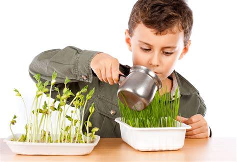 Plantas para Niños ¿Cuáles Son Las Más Fáciles De Cuidar?