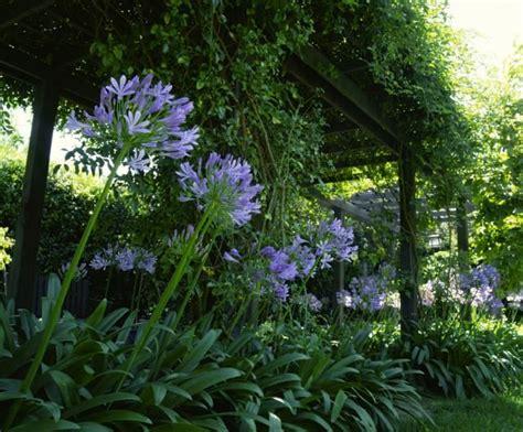 Plantas para patios con poca luz | Jardines | Plantas ...