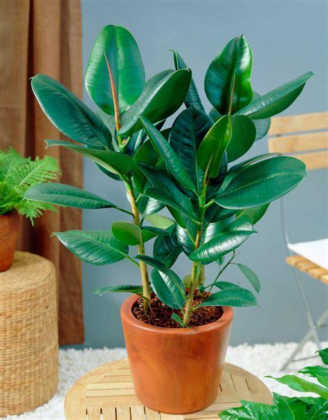 Plantas para purificar el aire de interiores