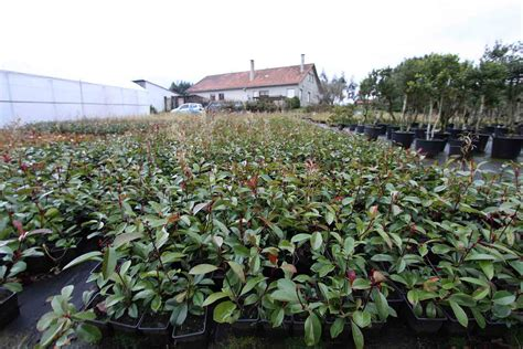 Plantas para setos Archivos   Vivero online. Plantas ...