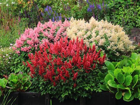 Plantas para un jardín de rocallas
