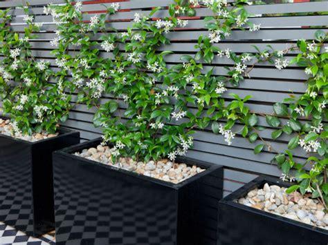 Plantas para un patio pequeño