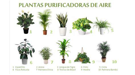 PLANTAS PURIFICADORAS DE AIRE | Latinos Con Salud